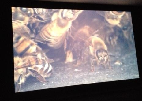 Pierre Huyghe bijenkolonie